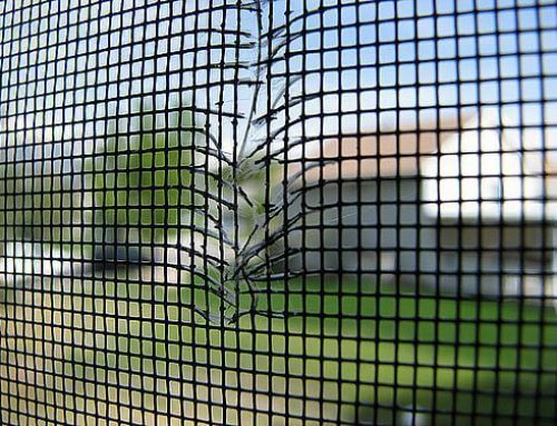 Window Film VS Window Screens